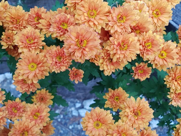 Hermosas flores que nos muestran la magia y belleza del mundo