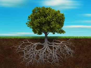 roots, tree, branches, grounding, earth, muladhara,