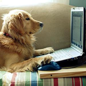 Dog using computer (copyright Elizabeth Aldridge/Flickr/Getty Images)