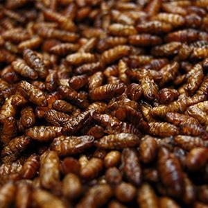 File photo of cockroaches for sale at a market (© Elena Nikolajeva/Alamy)