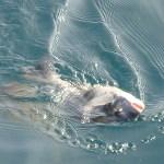 チヌ釣りの仕掛け 遊動仕掛けの流し方が釣りの基本になる!