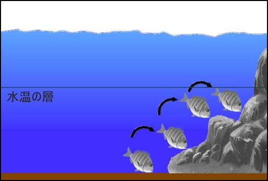 低温時の魚の動き