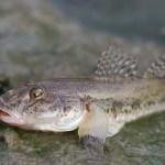 ハゼ・キス・ベラの基礎知識と釣れるポイントと釣り方テクニック!