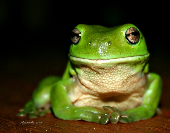 Thoughtful Frog on 365 Project
