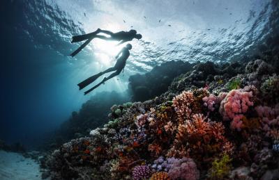 Discover scuba diving in Bora Bora