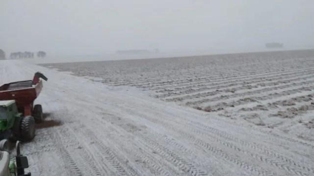 Campos maniceros en Córdoba, próximos a cosecharse, cubiertos de nieve (Foto de Luciano Gastaldi @luciano_gast)