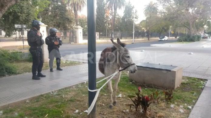 Los policías trasladaron al burro hasta el cantero central y allí lo amarraron a una columna.