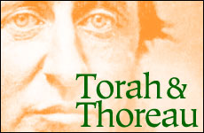 Torah and Thoreau