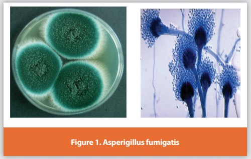 Image result for fungal contamination in pharmaceutical products