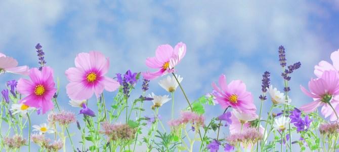 Plantera blommor