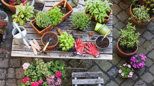 Image result for growing a garden