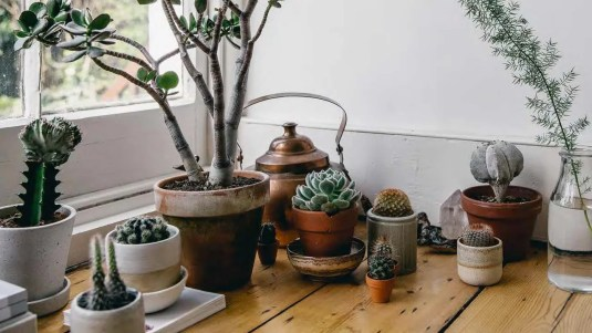 Image result for Succulents houseplant