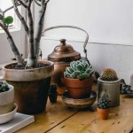 How To Care For Succulents And Not Kill Them 9 Plant Care Tips Architectural Digest