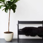 13 Best Indoor Plants And How To Care For Them Architectural Digest