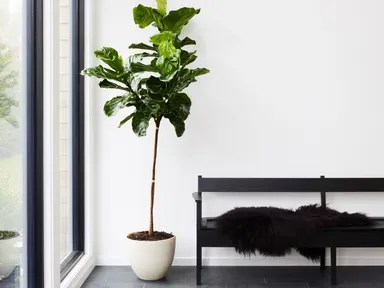 8 Best Indoor Plants   How To Take Care of Them   Architectural Digest 8 Best Indoor Plants   How To Take Care of Them