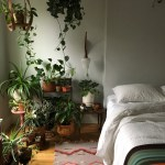 Caring For Indoor Plants In Low Light Conditions Architectural Digest