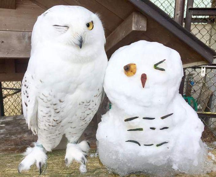 動物園辦攝影比賽 雪鴞「奇蹟萌照」成焦點 | 動物 | 巴士的報