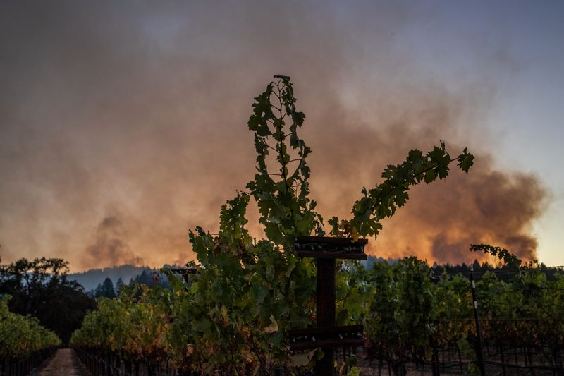 Up in Smoke: California Wine Country Counts Cost of Wildfire Damage   Top  News   US News