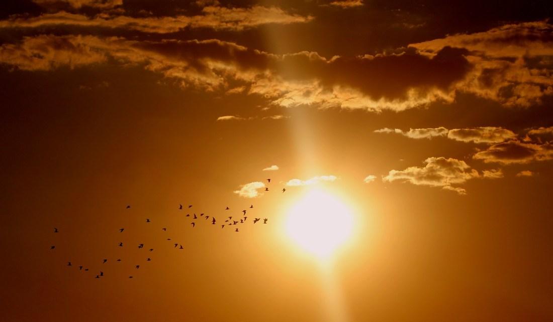 Matahari Sumber Energi Terbesar Di Bumi