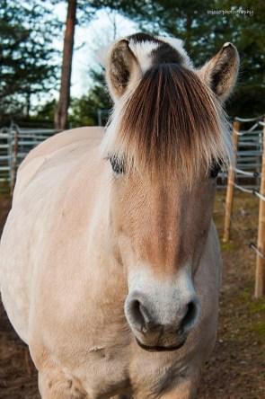 Vacker ljus häst L