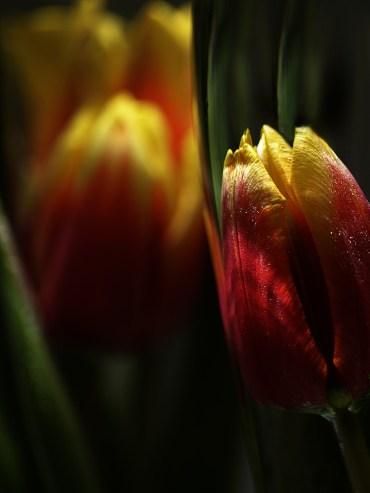 Tema 20 - Blomsterarrangemang - Gunbritt