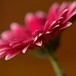 Blomma av Gunbritt