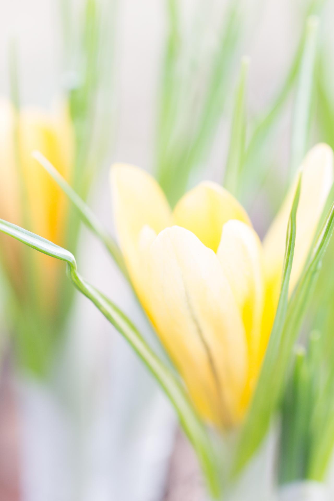 Blomma av Eva
