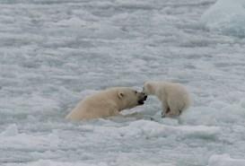 Mamma i isen liten tröstar