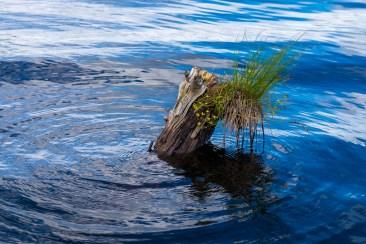 """""""Ringar på vattnet"""". Maritha"""