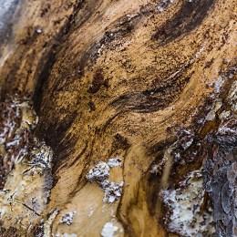 Trädformationer - av Margareta