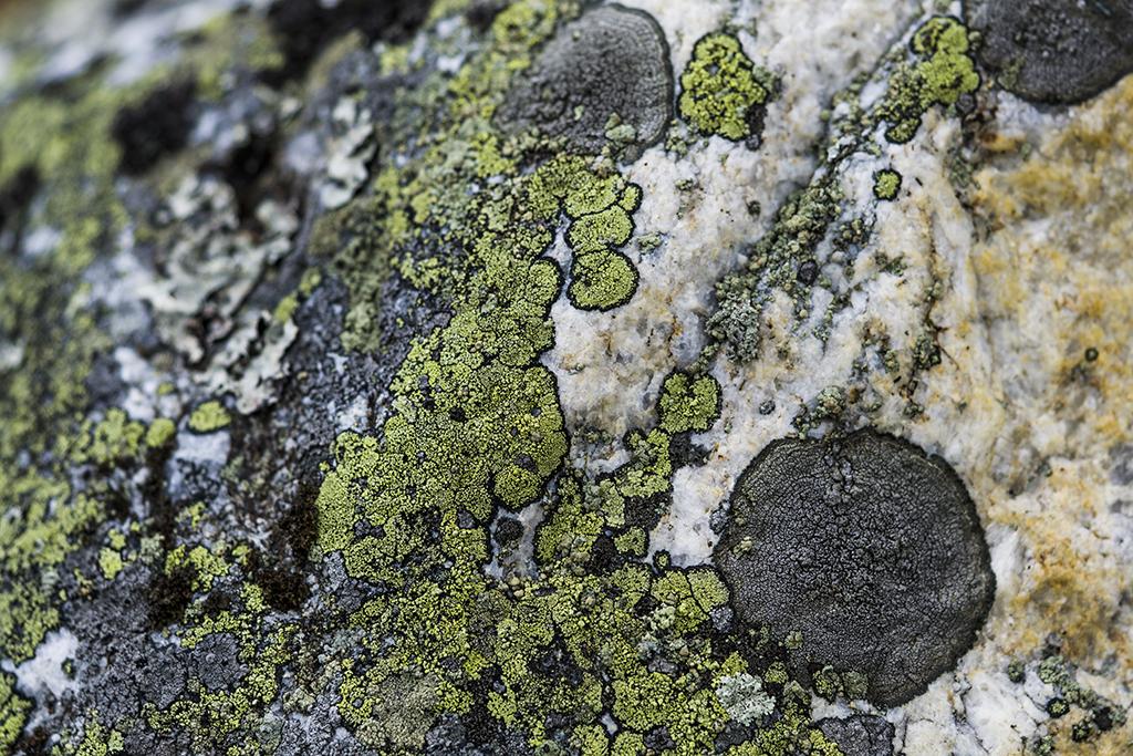 Naturens mönster - av Margareta