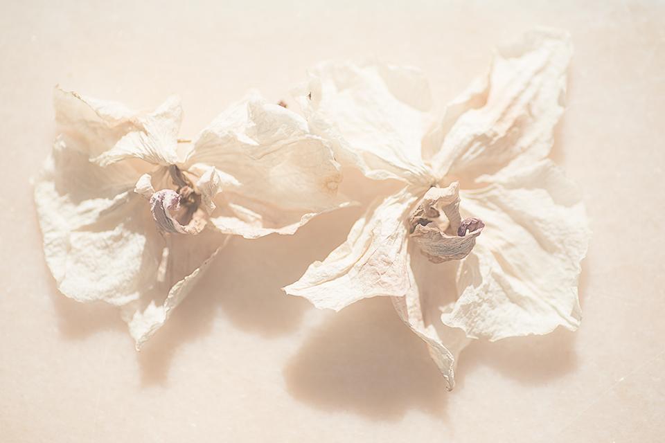 Torkade blommor - Gunbritt