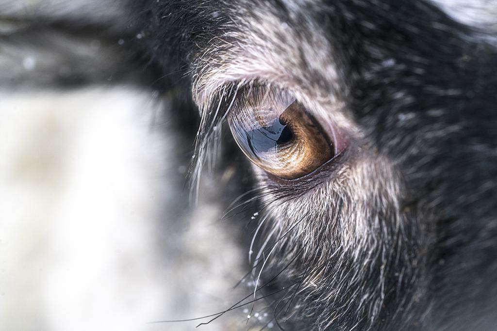 Vi ser med nya ögon, att hitta det som inte finns.