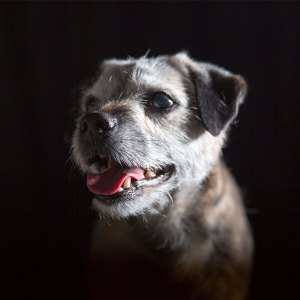 Hundporträtt i low key - av Eva