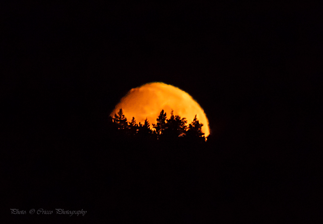 Månnedgång - Cricco