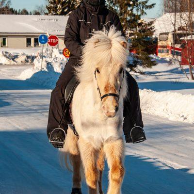 Islandshäst i Kallax - av Cricco