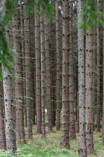 21 Ser inte skogen för alla träd (2) -av Margareta