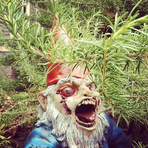 Gnome In Garden: Zombie Garden Gnome / Boing Boing