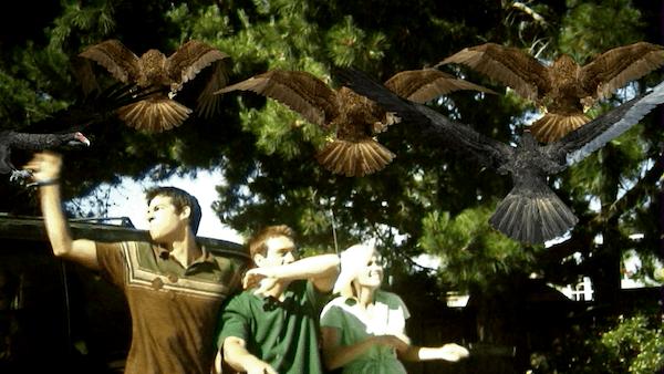 Image result for birdemic rifftrax