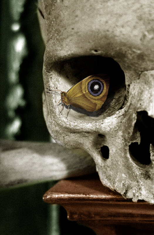 Butterfly in a skull's eye-socket