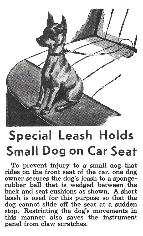 CarSeatDogLeash