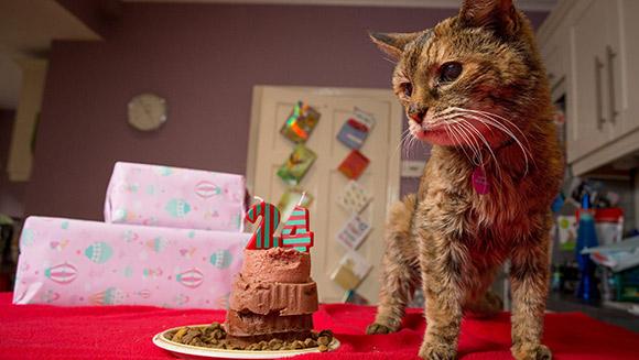 Poppy-oldest-cat-main
