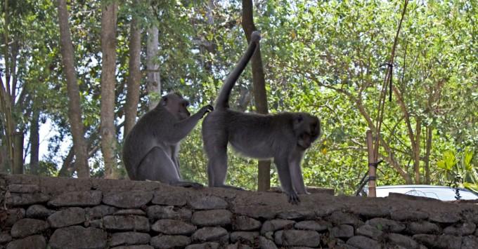 Mean Monkey Monday: Parting Shot