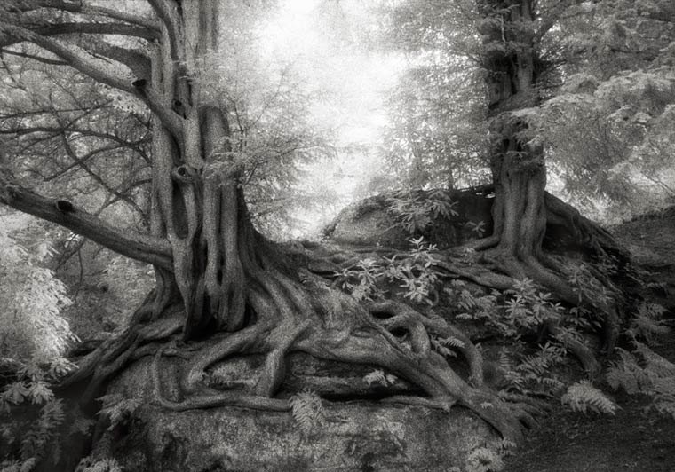 beth-moon-ancient-trees-13