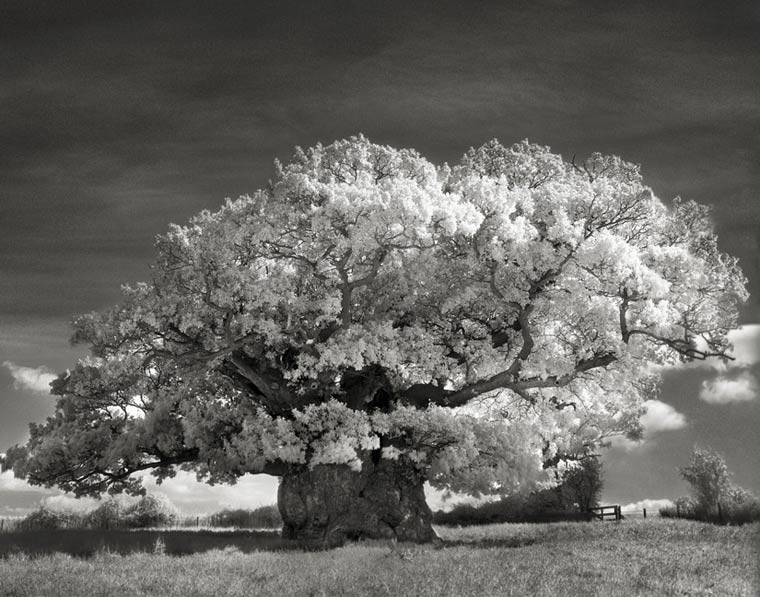beth-moon-ancient-trees-14