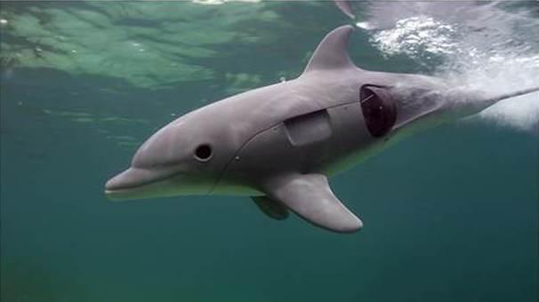 robo-dolphin