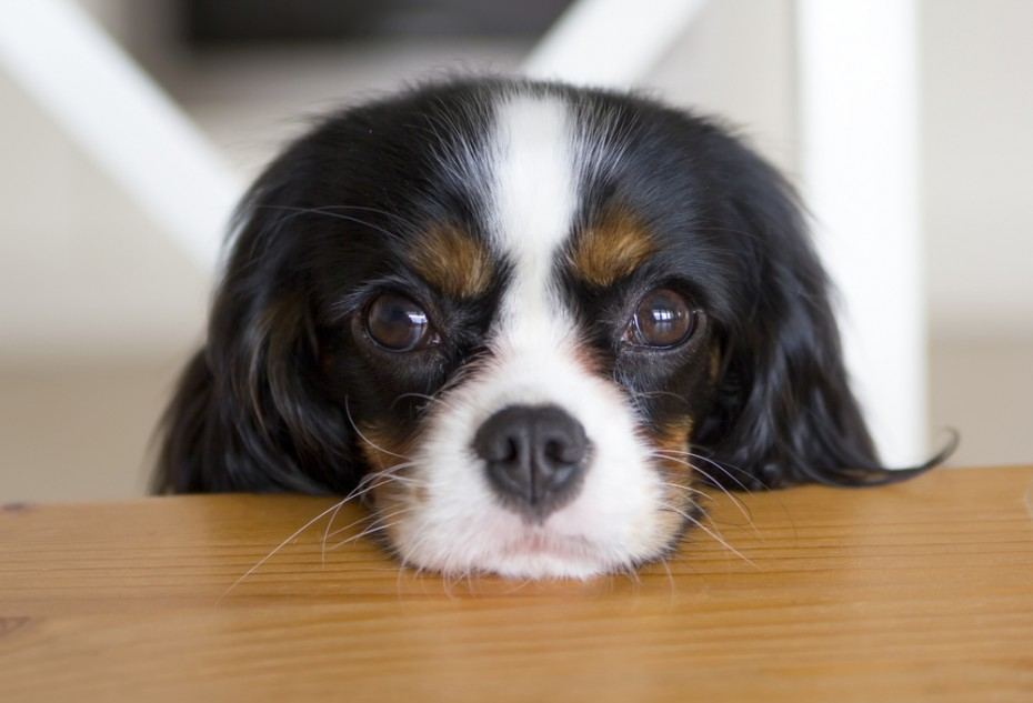 Eye-to-eye contact with your dog enhances bonding by upping oxytocin