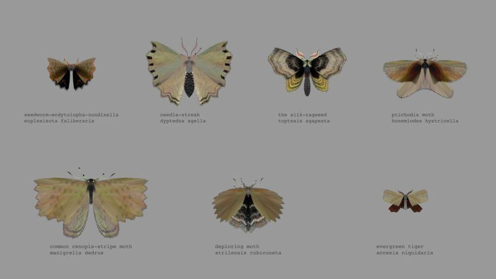 mothgen1