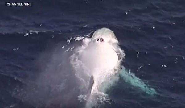 white-whale-01
