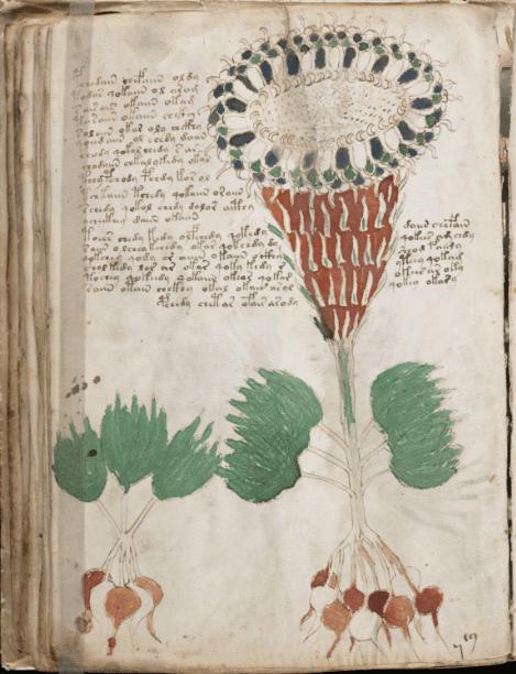 Voynich3